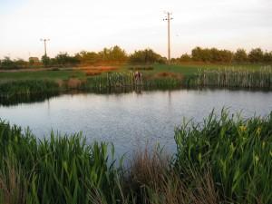 Runshaw pond