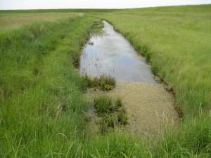 Water vole ditch